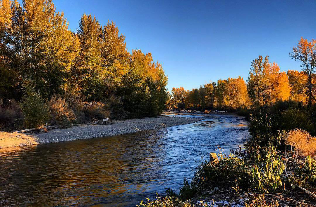 Fishing forecast silver creek for Silver creek fishing report